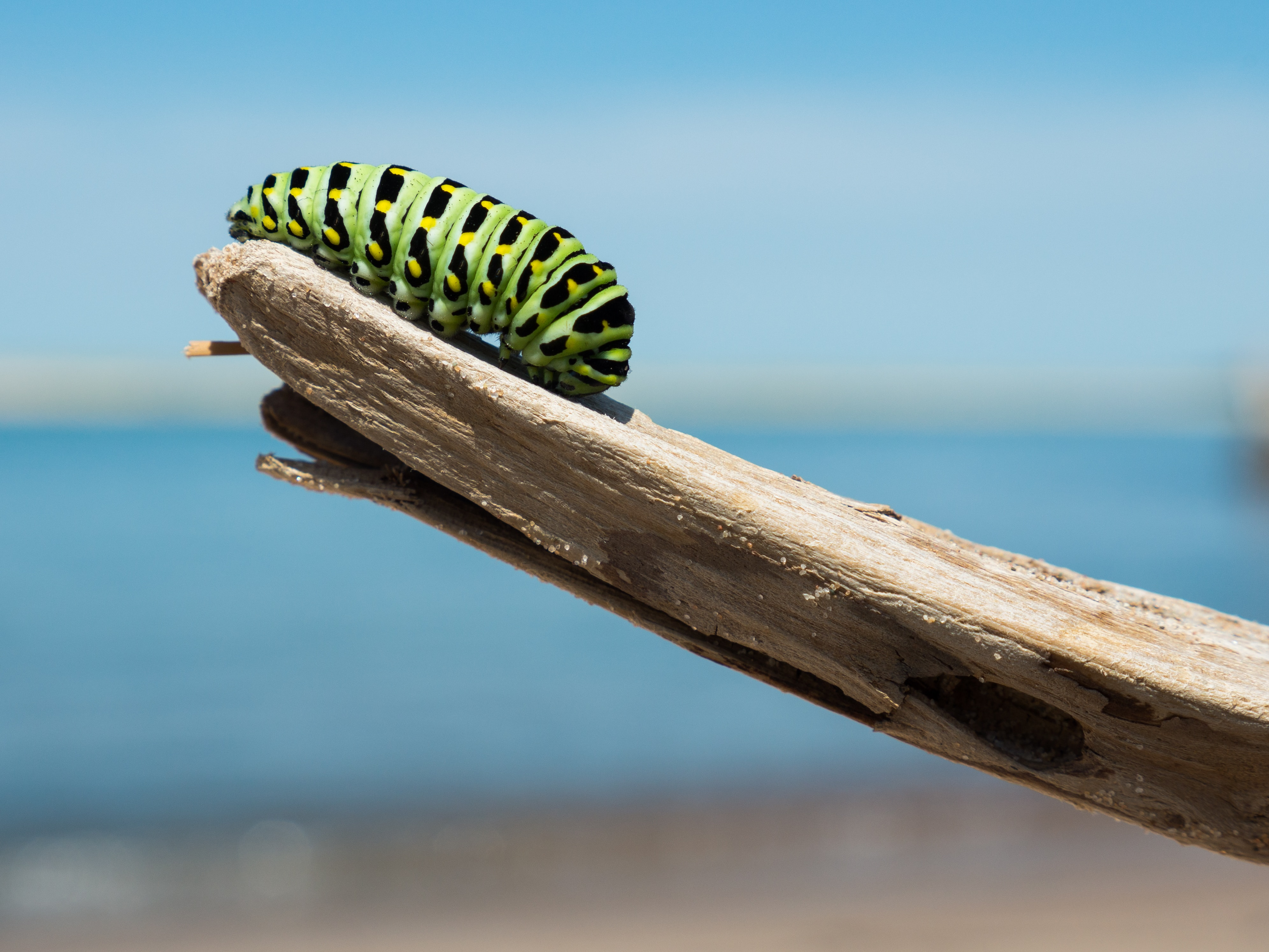 Image of a caterpillar