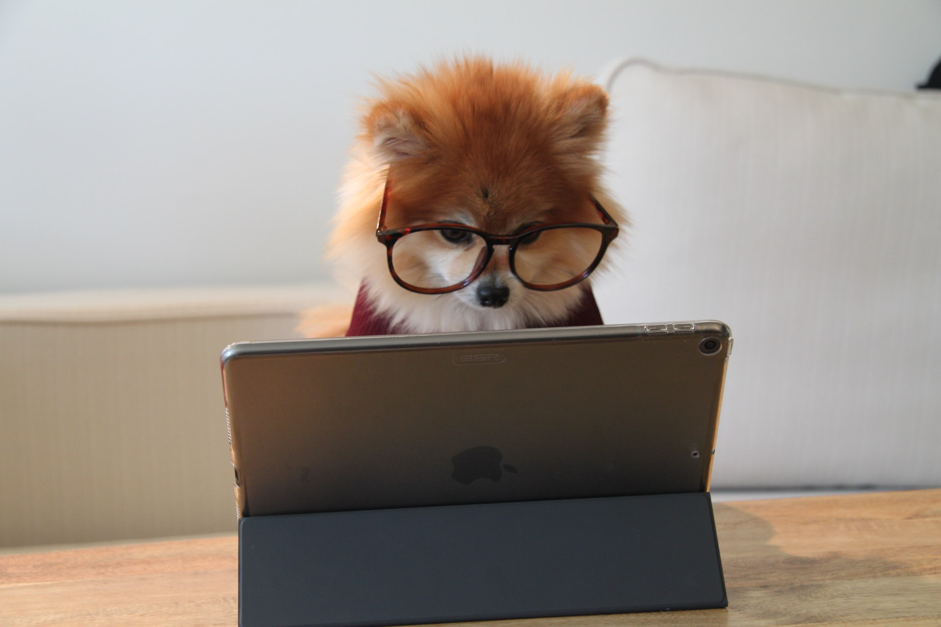 Dog working at a computer